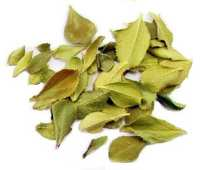Brew for Africa Buchu Leaves, Dried (20g.)